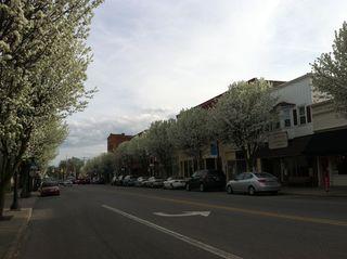 Bradford pear trees line Main Street